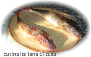 Gallinella di mare mazzola cappone di mare ricette for Casa tradizionale giapponese significa